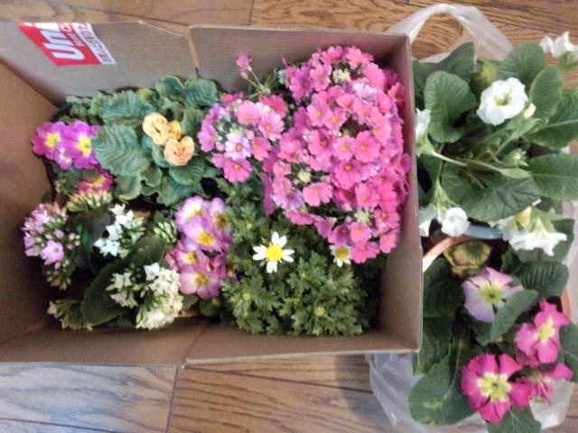今日、買ったお花たち☆