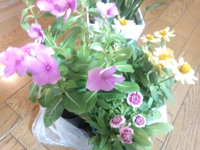 今日我が家にやって来た お花達☆