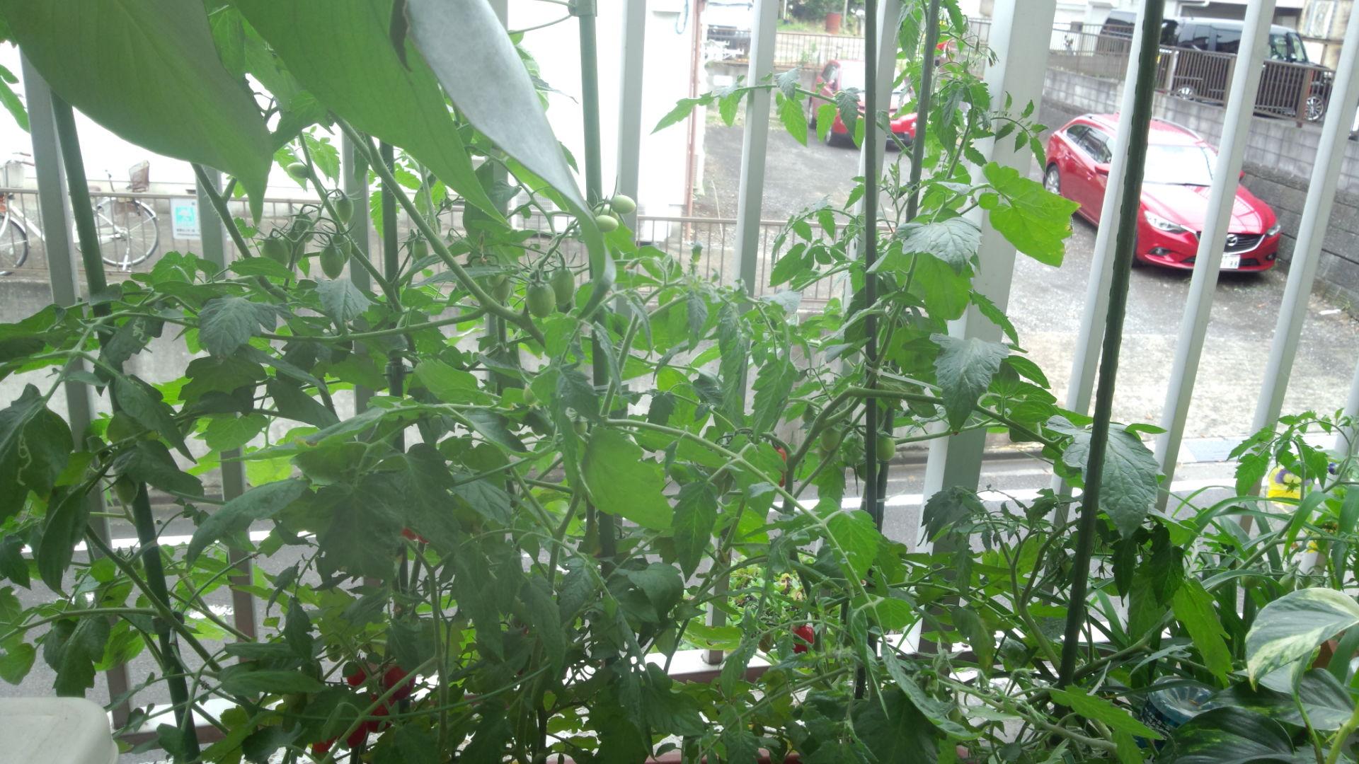 植物・植え替えとトゥルシー☆